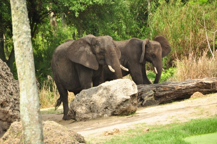 Wild Africa Trek 153