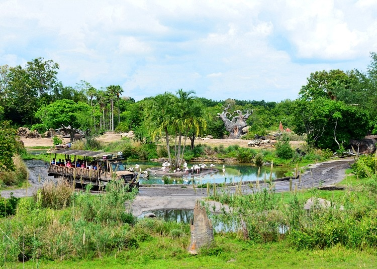 wild africa trek animal kingdom