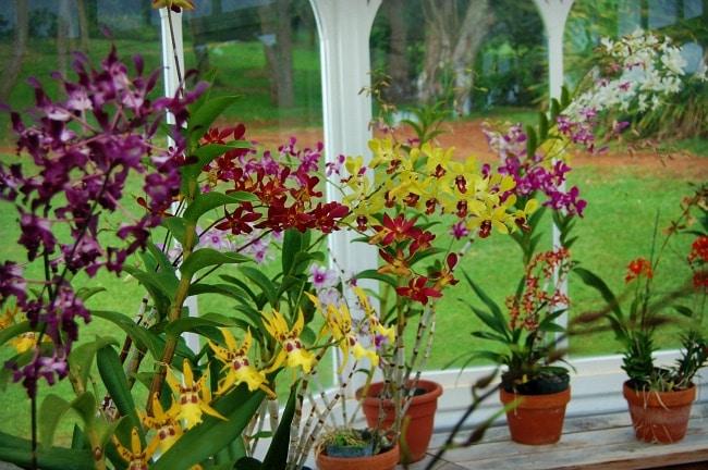 orchids lanai