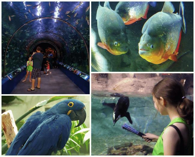 nola aquarium