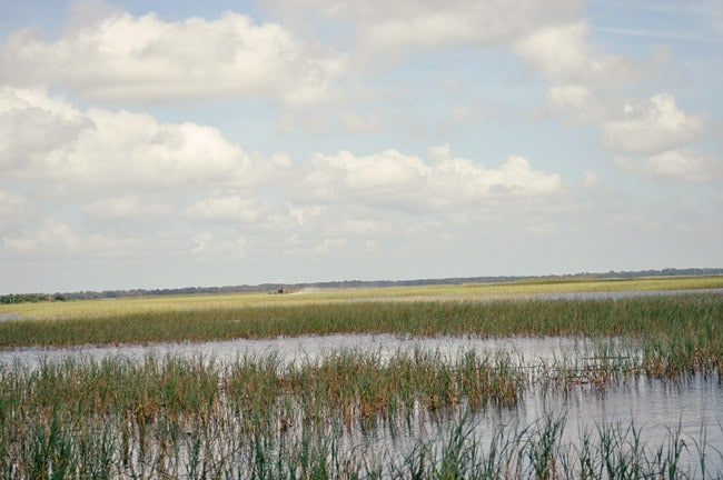 airboat tour kissimmee