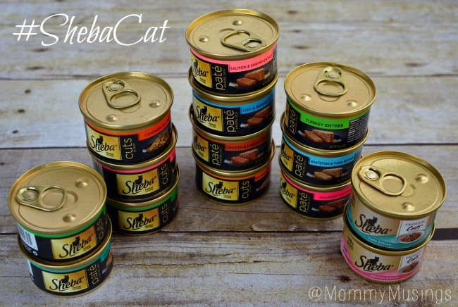 sheba cat #shop