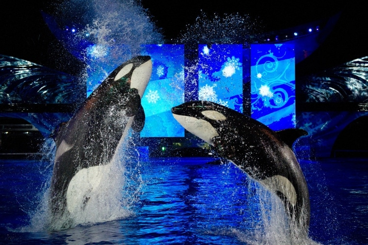 Seaworld's Christmas Celebration shamu