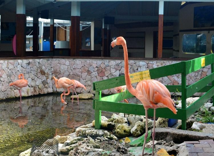 flamingo curacao