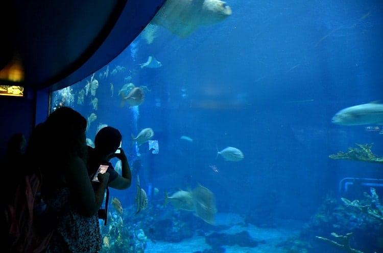 aquarium at Epcot