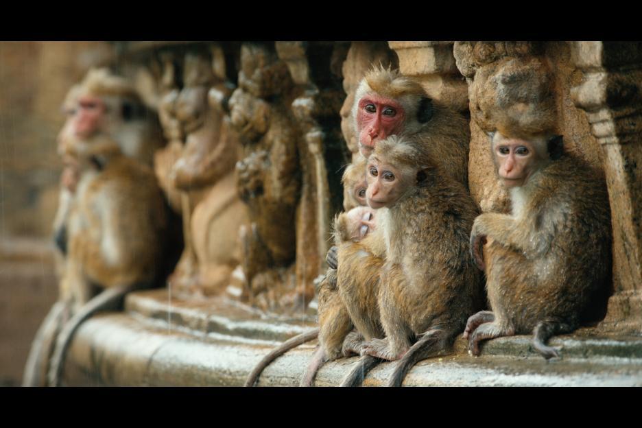 monkeykingdom3