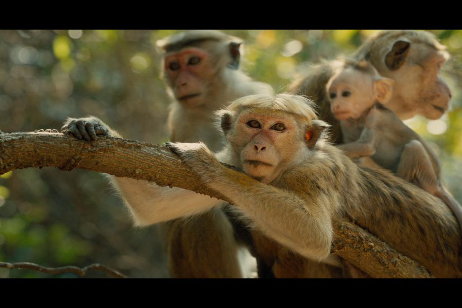 monkeykingdom4