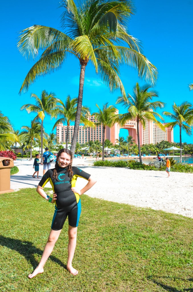 swim with dolphins atlantis paradise island