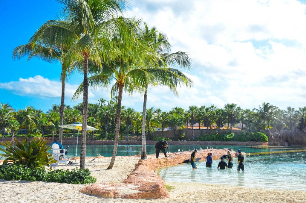 dolphin encounter atlantis paradise island
