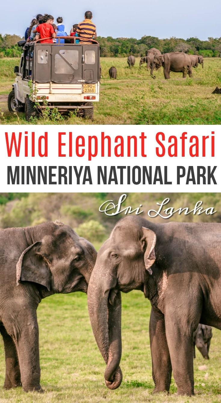 wild elephant safari sri lanka