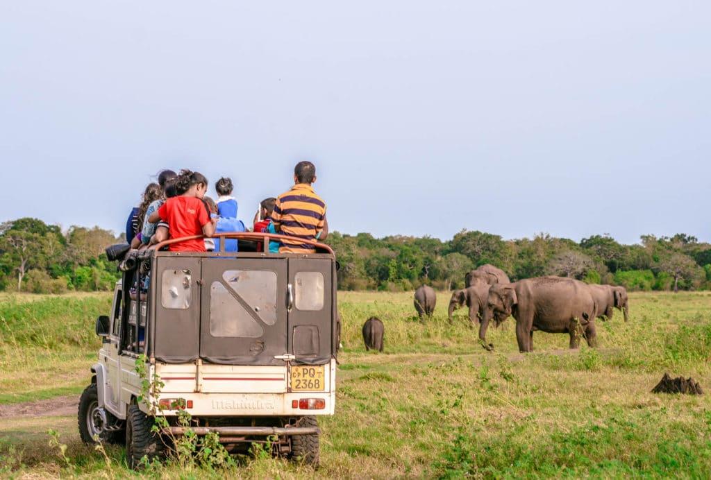 Minneriya National Park elephant safari