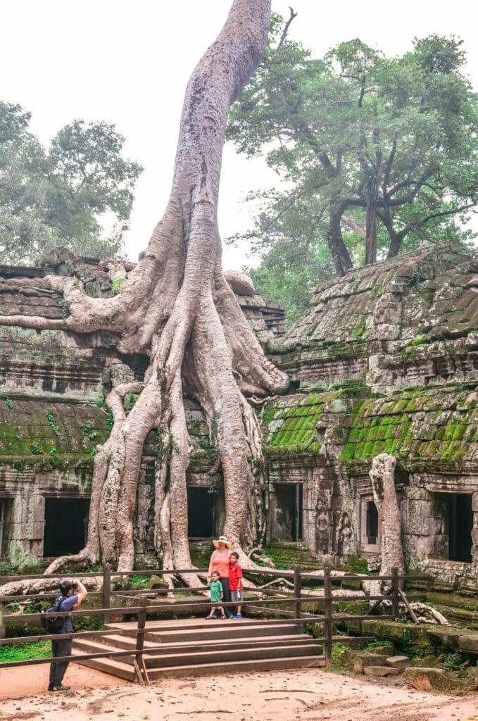Ta Prohm tree tomb raider