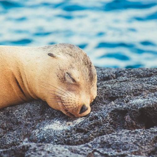 Galapagos sea lion Santa Cruz II metropolitan touring