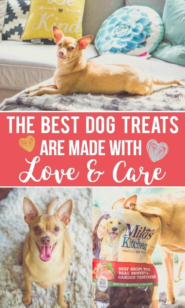 the best dog treats milo's kitchen