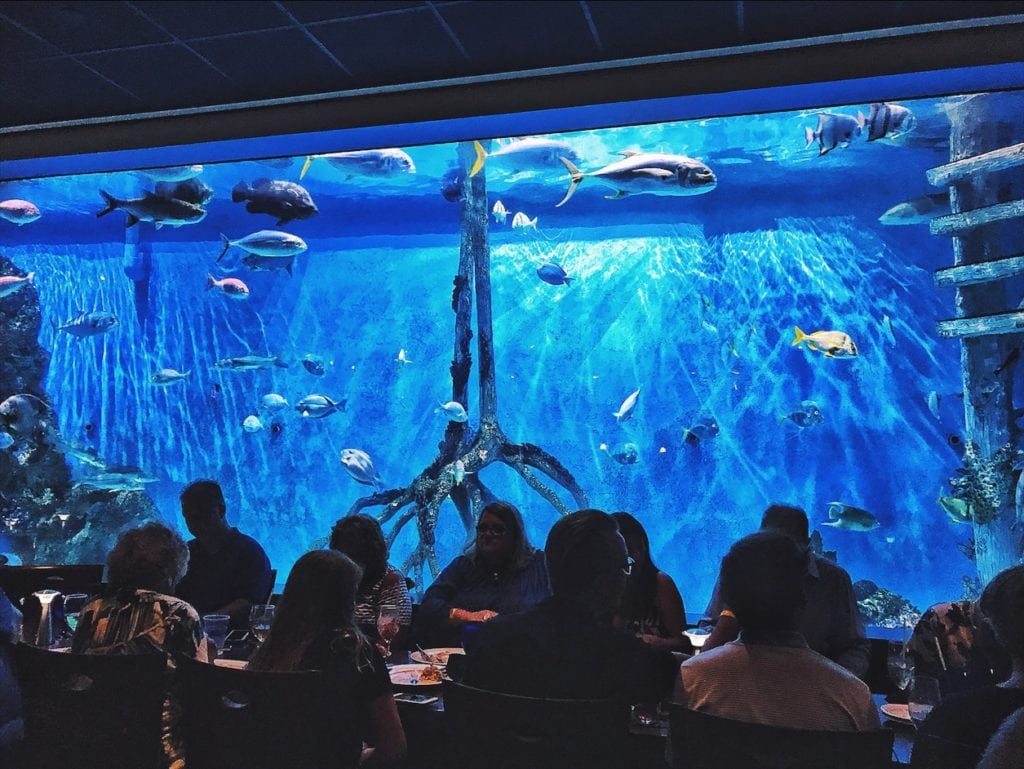 rumfish grill aquarium tanked