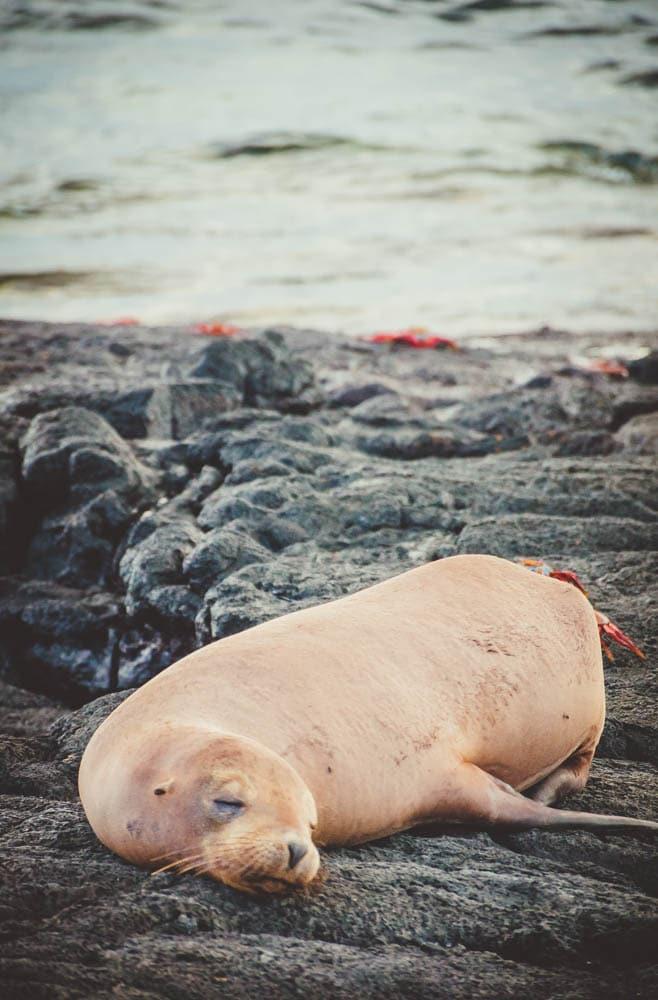 galapagos cruise tour sea lion