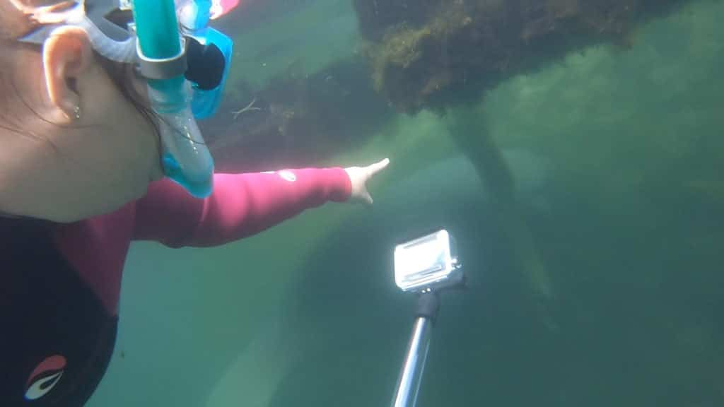 GoPro for swimming with manatees
