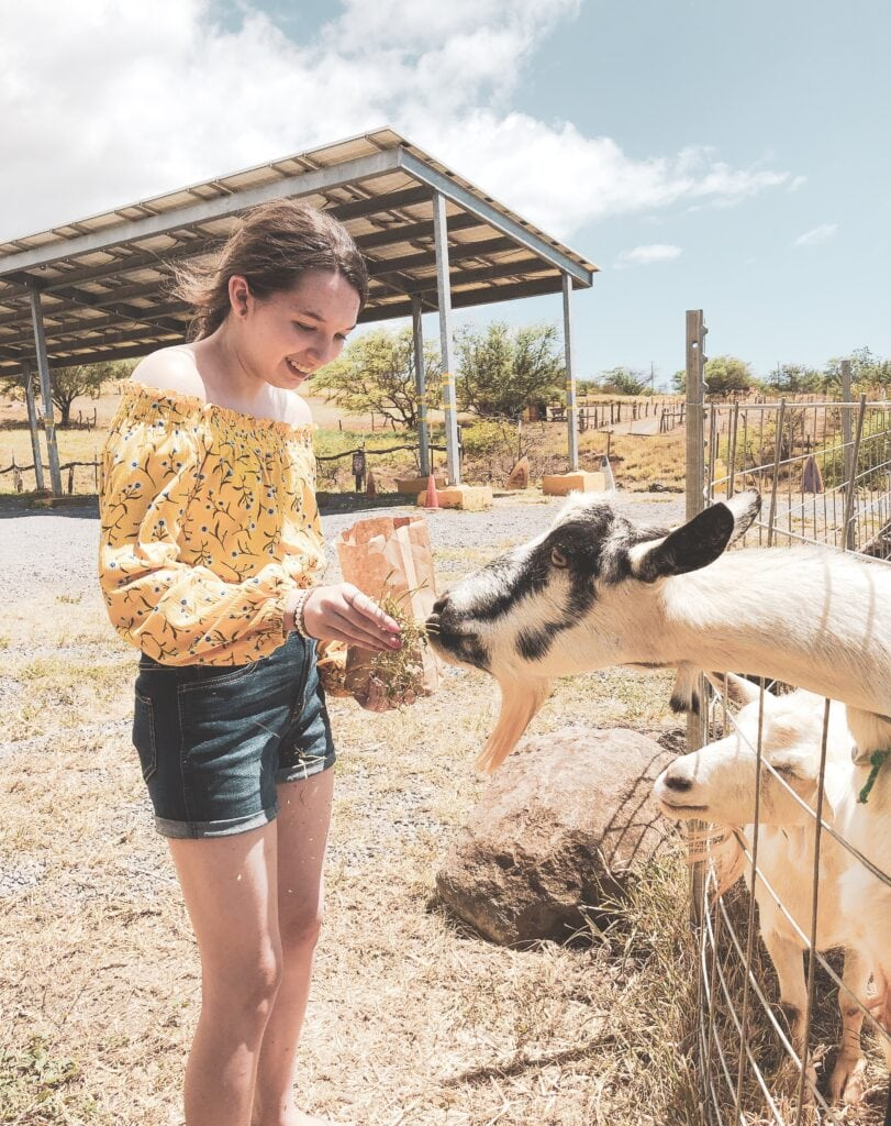 Feeding the goats at Surfing Goat Dairy