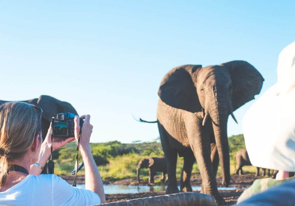 guest taking up close photo of elephant herd at thanda safari
