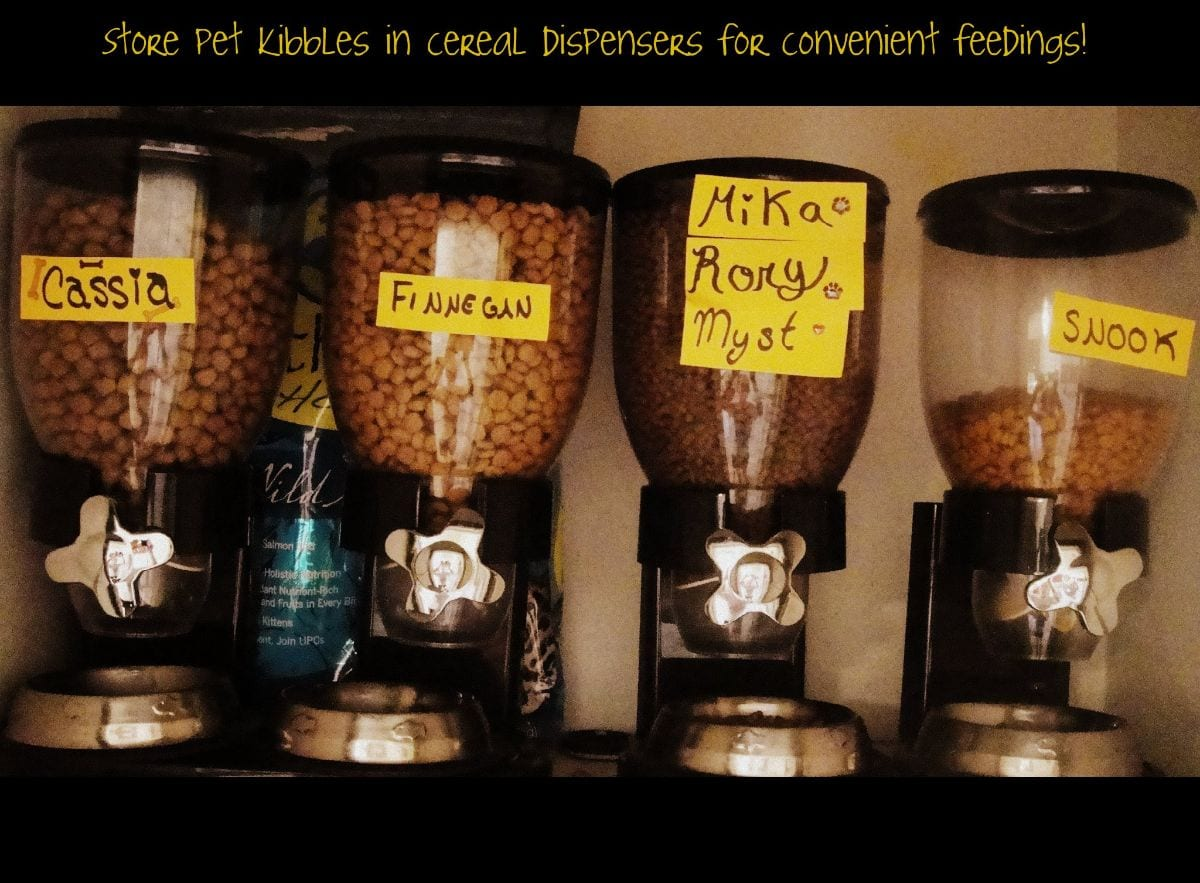 a cupboard shelf is shown with 4 dry food dispensers lined up. Each one has a different food into it and they are labelled on the front with yellow tape and black writing