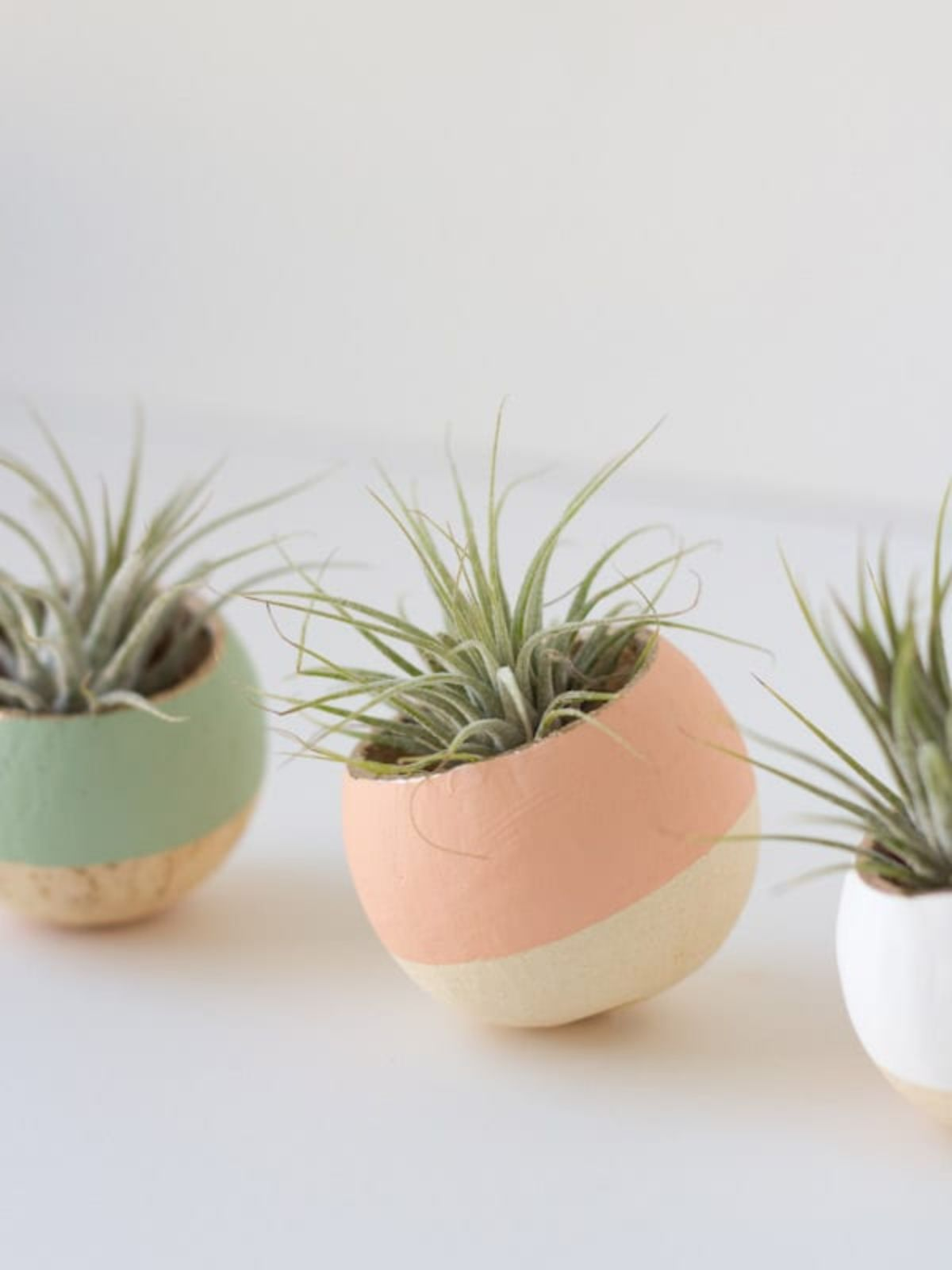 3 ball-shaped plant pots with colored rims sit on a white table. They have succulents planted in them.